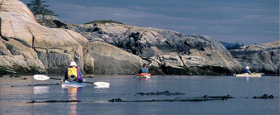 group of paddlers in kayaks